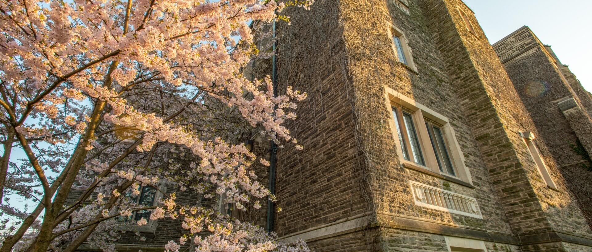 Spring blossoms outside Hamilton Hall